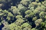 Borneo rainforest -- sabah_0490