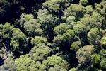 Borneo rainforest -- sabah_0491