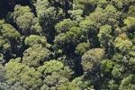 Borneo rainforest -- sabah_0492