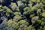 Borneo rainforest -- sabah_0493