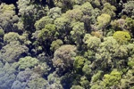 Borneo rainforest -- sabah_0495