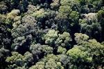 Borneo rainforest -- sabah_0496
