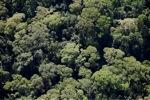 Borneo rainforest -- sabah_0498