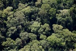 Borneo rainforest -- sabah_0499