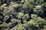 Borneo rainforest -- sabah_0500