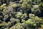 Borneo rainforest -- sabah_0501