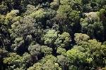 Borneo rainforest -- sabah_0502