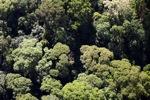 Borneo rainforest -- sabah_0503