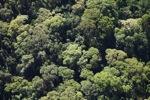 Borneo rainforest -- sabah_0504