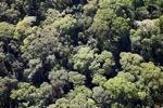 Borneo rainforest -- sabah_0505