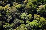 Borneo rainforest -- sabah_0506