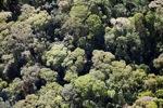 Borneo rainforest -- sabah_0507