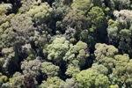 Borneo rainforest -- sabah_0508