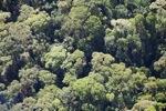 Borneo rainforest -- sabah_0509
