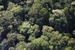 Borneo rainforest -- sabah_0510