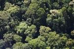 Borneo rainforest -- sabah_0511