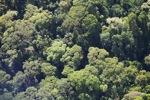 Borneo rainforest -- sabah_0512