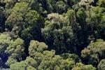 Borneo rainforest -- sabah_0513