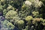 Borneo rainforest -- sabah_0515