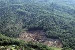 Loss of rainforest in Sabah, Malaysia -- sabah_0523
