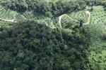 Oil palm plantation -- sabah_0525