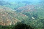 Deforestation in Borneo -- sabah_0527
