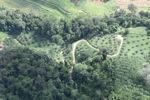 Oil palm plantation -- sabah_0529
