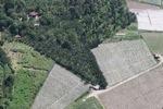 Oil palm plantation -- sabah_0533