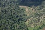 Oil palm plantation -- sabah_0537