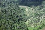 Oil palm plantation -- sabah_0538