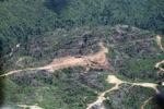 Chopping down rainforest in Sabah, Malaysia -- sabah_0541