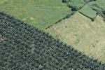Oil palm plantation -- sabah_0542