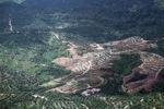 Oil palm plantation -- sabah_0547