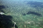 Oil palm plantation -- sabah_0548