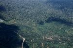 Oil palm plantation -- sabah_0549