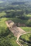 Oil palm plantation -- sabah_0552