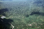 Oil palm plantation -- sabah_0553