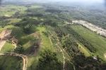 Oil palm plantation -- sabah_0554