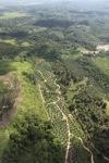 Oil palm plantation -- sabah_0555