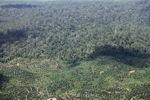 Oil palm plantation -- sabah_0556