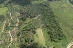 Oil palm plantation -- sabah_0557