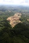 Oil palm plantation -- sabah_0561