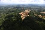 Oil palm plantation -- sabah_0563