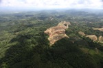Oil palm plantation -- sabah_0564