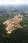 Oil palm plantation -- sabah_0565