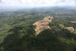 Oil palm plantation -- sabah_0566