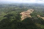 Oil palm plantation -- sabah_0567