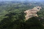 Oil palm plantation -- sabah_0568