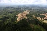 Oil palm plantation -- sabah_0570