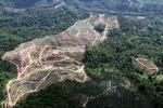Oil palm plantation -- sabah_0571